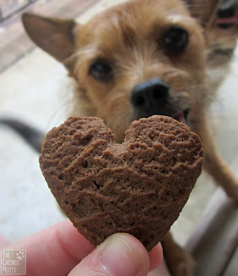Jada wants a cookie kiss dog cookie from paws barkery