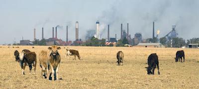 Contaminación ganaderia