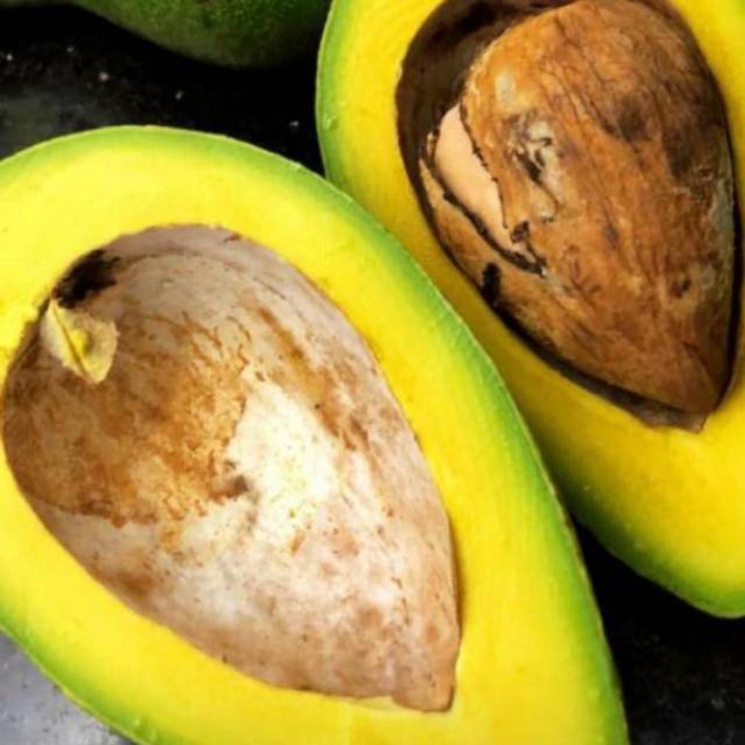 Buruan Beli! bibit tanaman alpukat mentega jumbo super buah mencapai 2kg COD Kota Bekasi #jual bibit buah buahan