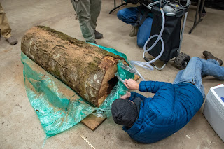 Man looking at log wrapped in cellophane