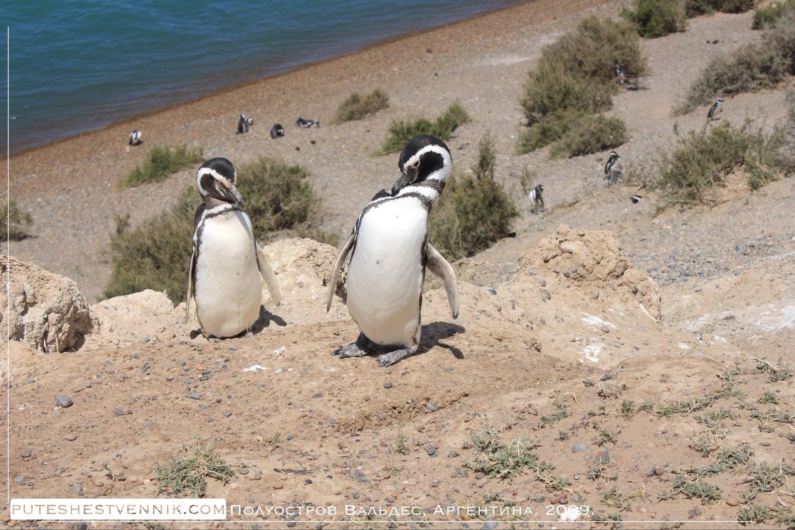 Пингвины на берегу Атлантического океана