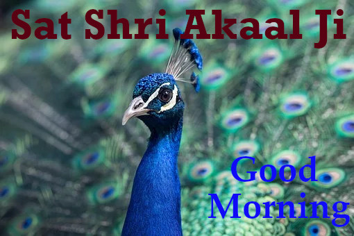 Sat Shri Akaal Ji Good Morning