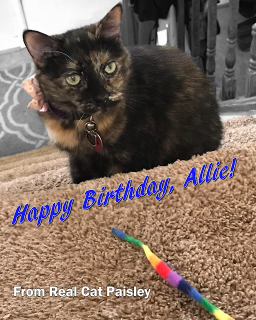Real Cat Paisley wishes Allie a happy birthday!