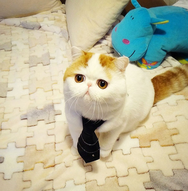 Snoopy, The Cutest Cat Ever-2