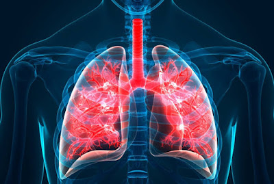 New Targeted therapies developed to reduce lung fibrosis