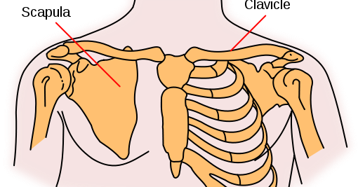 Pain Sensation Collarbone Pain