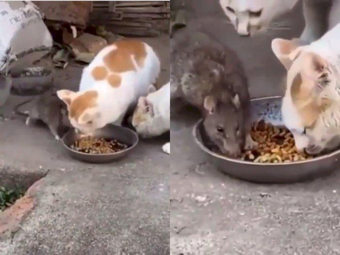 Viral! Tikus Ikut Nimbrung Makan Bareng Kucing, Netizen Ngakak
