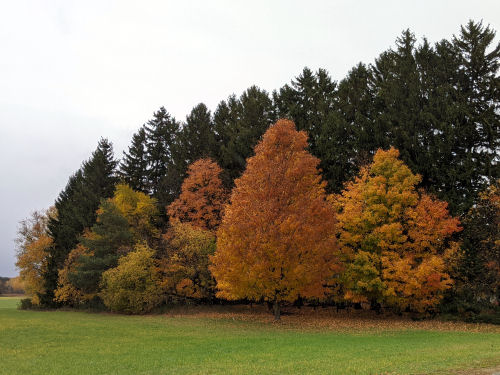 oranged and gold autumn trees