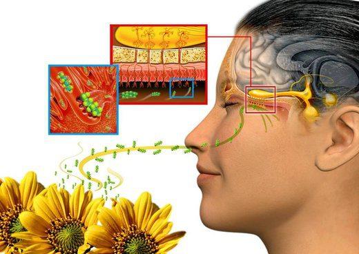 Resultado de imagem para efectos de la aromaterapia