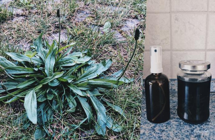 DIY Spitzwegerich Tinktur zur natürlichen Bekämpfung von juckenden Mückenstichen