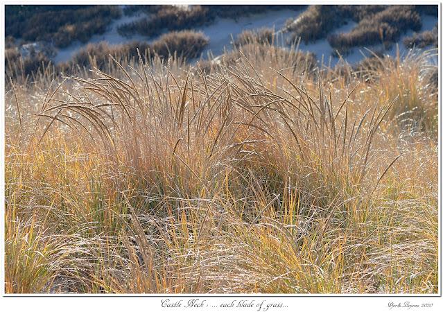 Castle Neck: ... each blade of grass...