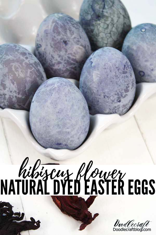 Dye Easter eggs naturally using Hibiscus flower blooms or hibiscus tea. The color will astound you with its deep blueish violet. Great for homeschool science arts and crafts.