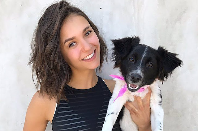 CELEBRITIES AND PET