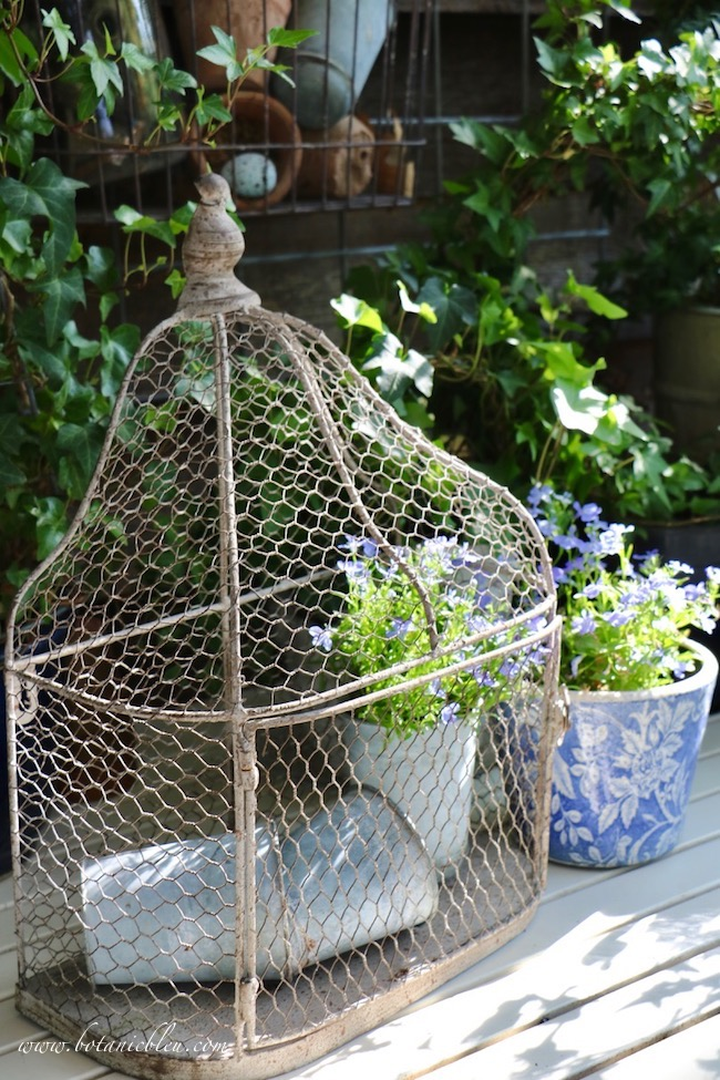 French Country Spring potting table with wire birdcage, blue lobelia plants, and vintage French zinc seed pots