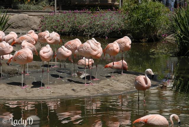 Flamingos: LadyD books