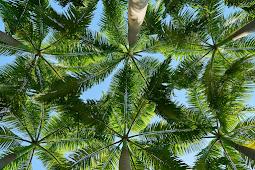 The First Palmetum of Uttarakhand - Haldwani