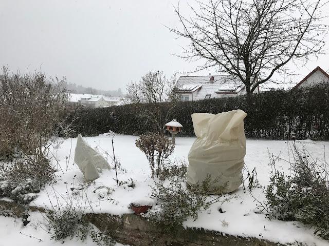 genügt der Winterschutz hier? (c) by Joachim Wenk