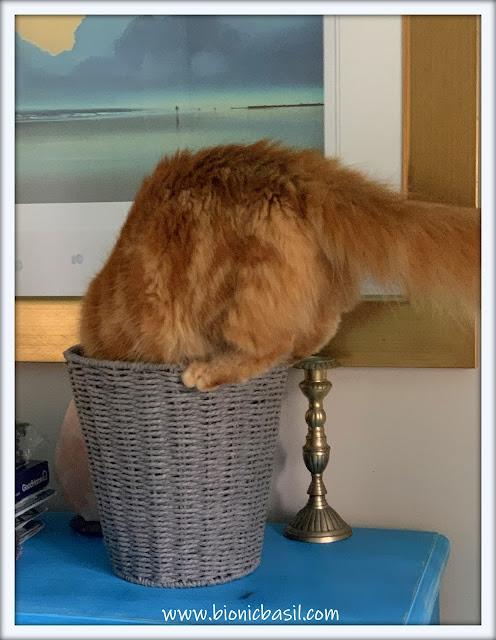 Friday Fluffers at BBHQ ©BionicBasil® Basketcase Fudge