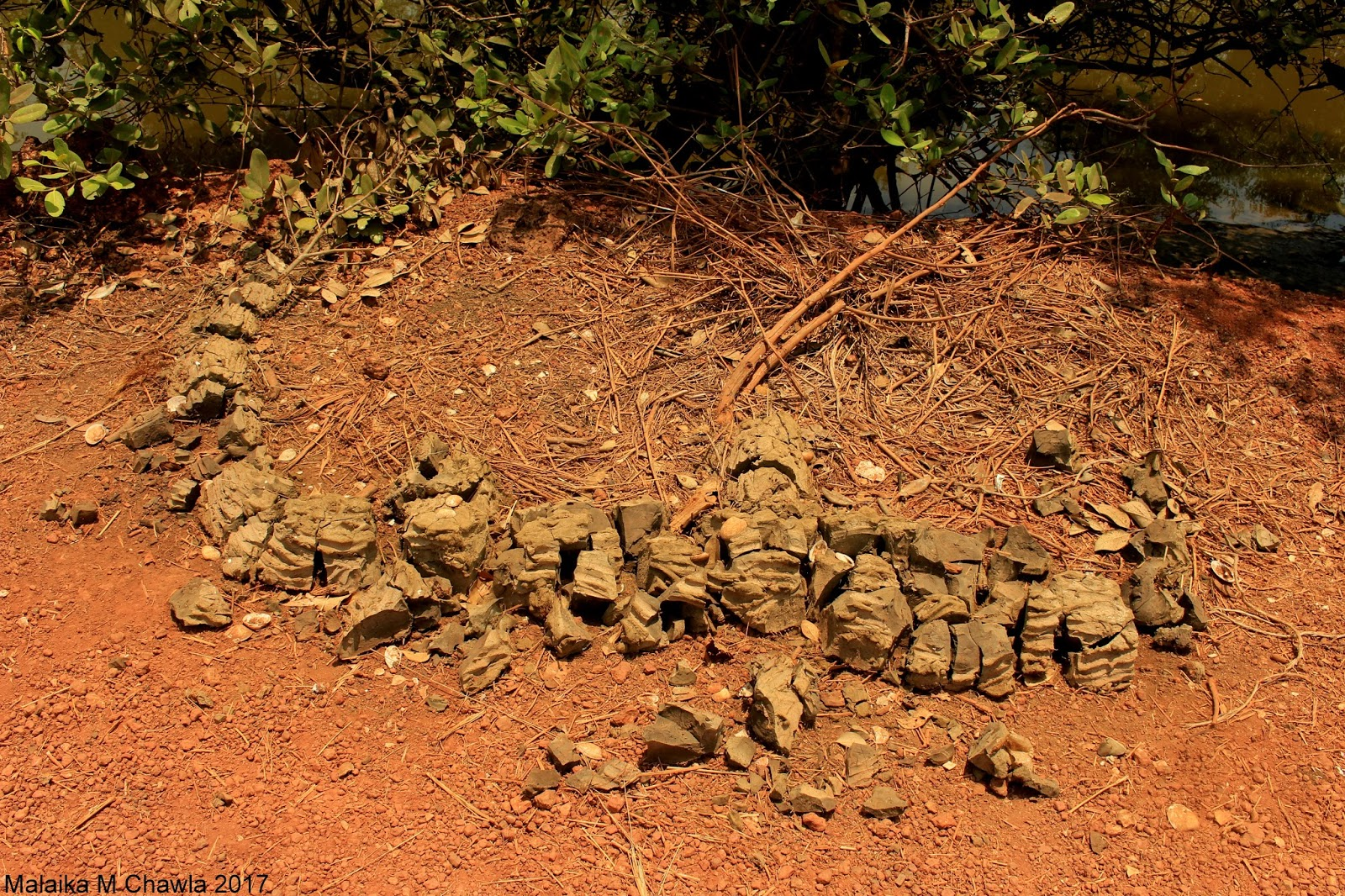 Travelling Lens: Crocodile Survey, Otter Scat and a Five ... - photo#40