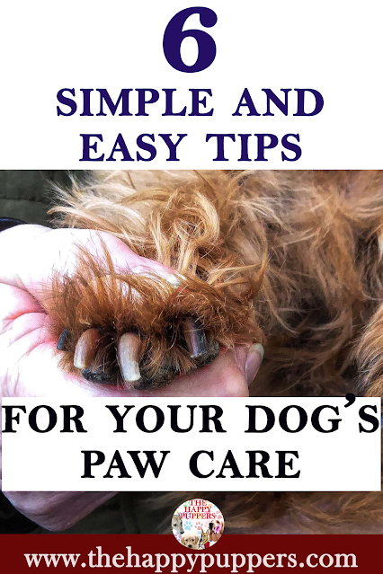 6 amazing and simple ways to protect and care for your dog's feet