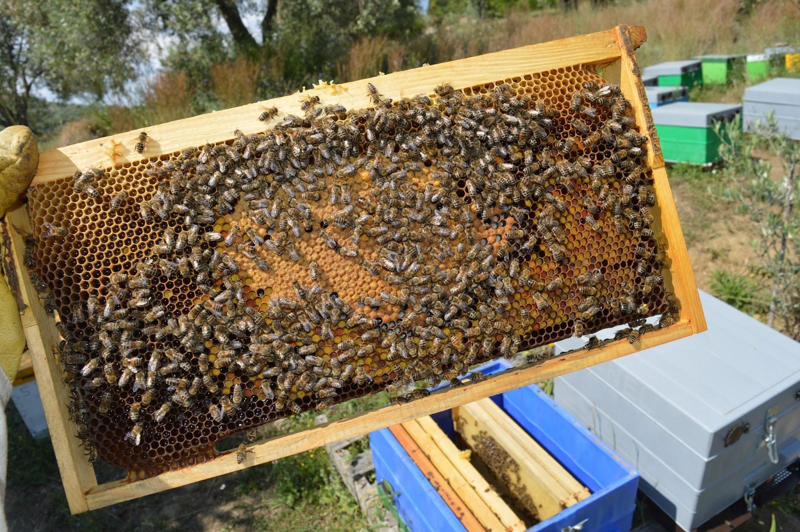"""Ξάνθη: """"Προστατεύουμε τις μέλισσες"""" - Οδηγίες από την Κτηνιατρική"""