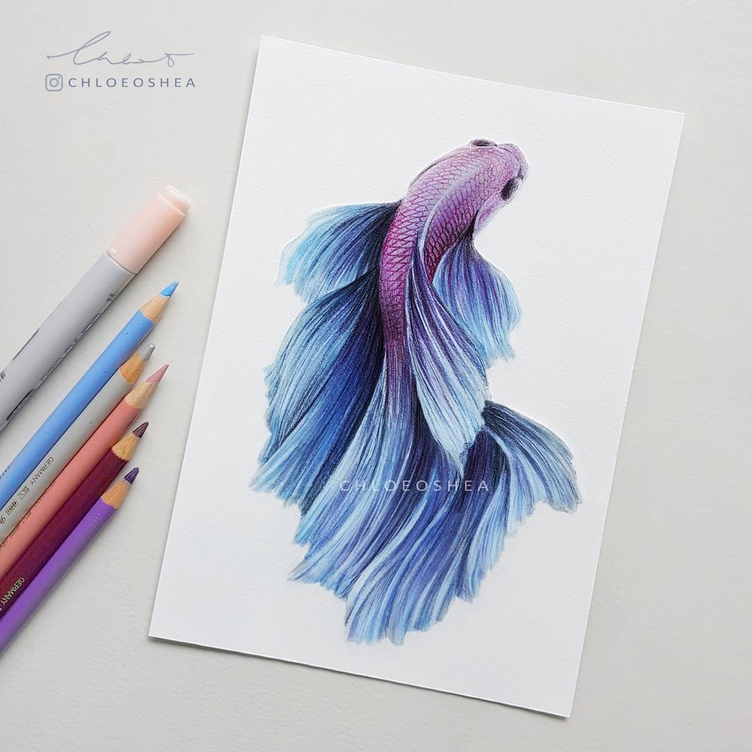 04-Betta-Siamese-Fighting-Fish-Chloe-O-Shea-Realistic-Wind-Animal-Drawings-www-designstack-co
