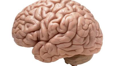 Beneficio da Banana Para o Cérebro: