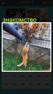 кошка через клетку хочет познакомиться с тиграми 667 слов 8 уровень