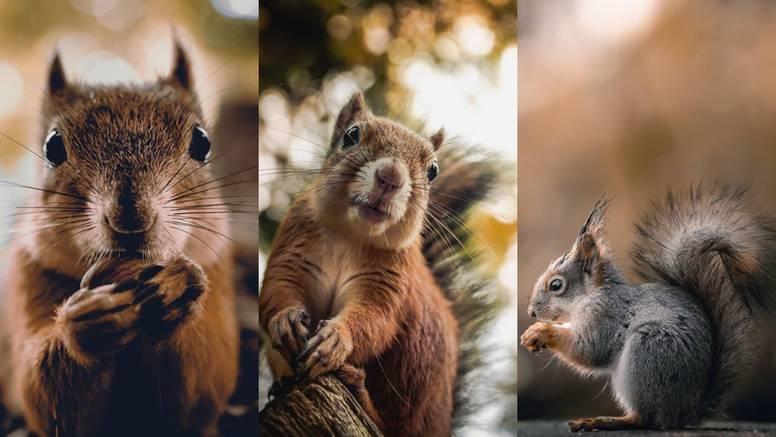 vjeverice-životinje-lisica-fotografija-priroda-ptice