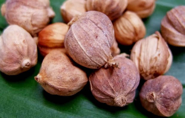 Pengaruh Tolak Angin dan Minyak Kayu Putih untuk Ibu Hamil