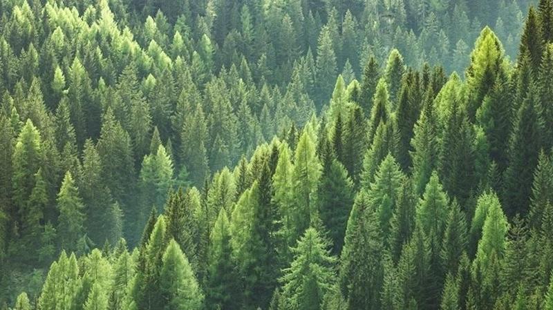 650 bin faydalı böcek ormanları koruyacak