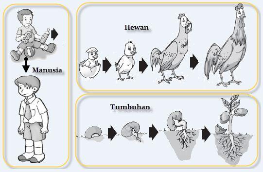 Ciri-Ciri Khusus Makhluk Hidup Hewan Dan Tumbuhan Beserta Contohnya Terlengkap