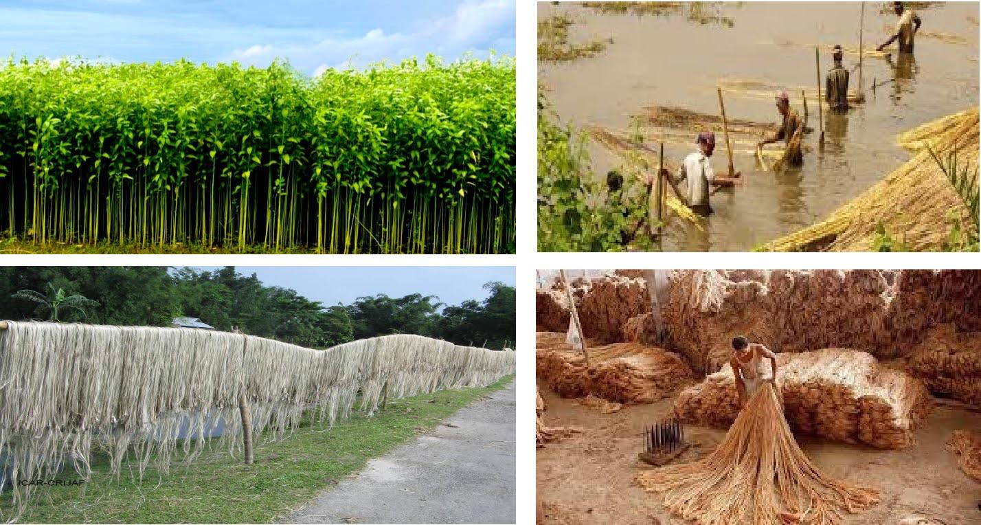 "The ""Golden Fibre"" of Bangladesh -An Overview"