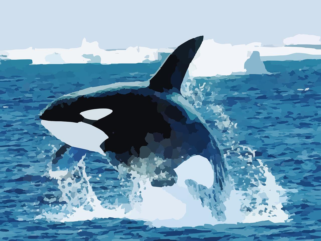 Killer Whale - Rörelse för djurrätt
