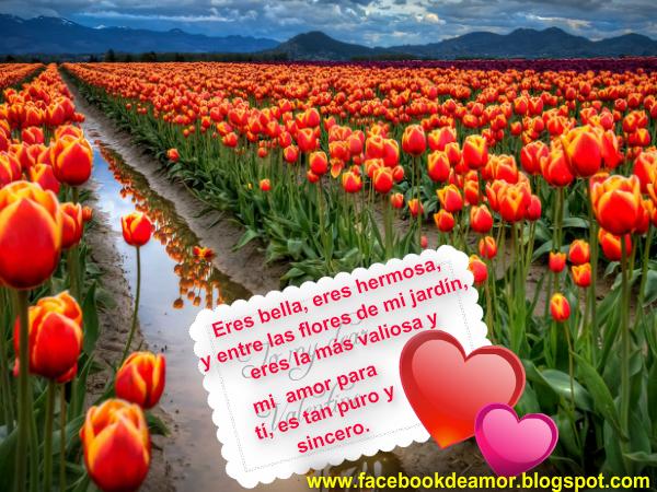 Frases De Amor Verdadero Y Sincero Archivos Imagenes De