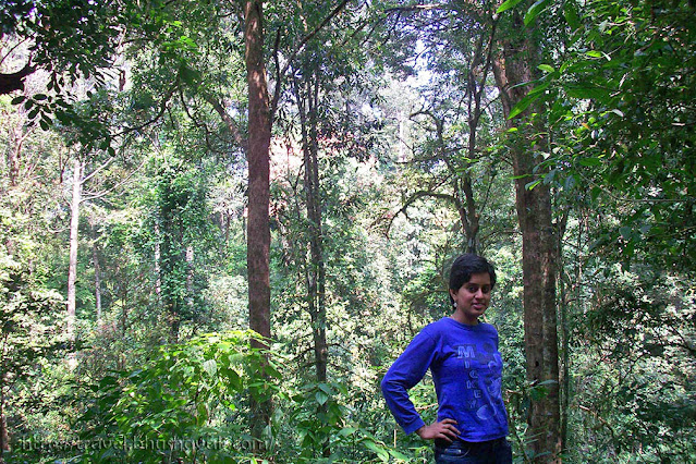 Vazhachal Forest route