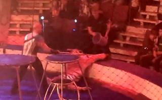 Τίγρης σε τσίρκο κατέρρευσε με σπασμούς στη διάρκεια παράστασης - Οργή για την αντίδραση του εκπαιδευτή