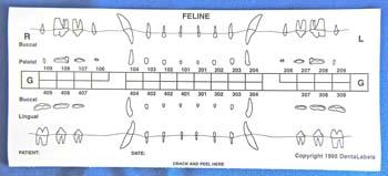 Feline Dental Chart