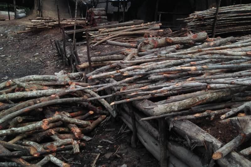 Pembabatan Hutan Bakau di Dumai, Terkesan Pembiaran dari Dinas Terkait