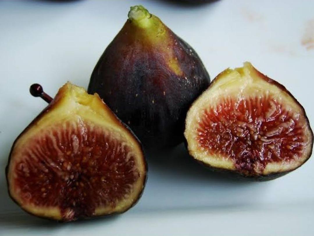 Fresh cangkok bibit buah tin MALTA BLACK Pematangsiantar