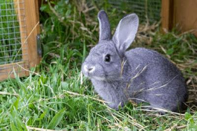 Tips to choose Rabbit Type