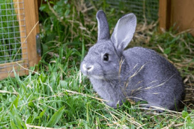 ways to keep rabbits at home for beginners