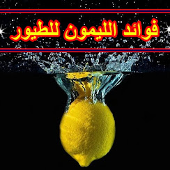 فوائد الليمون للطيور