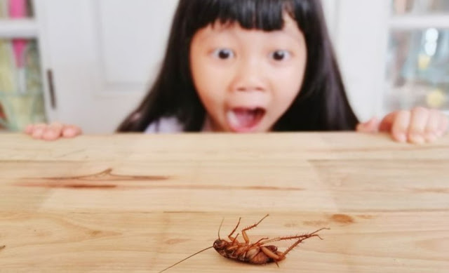 Best Tips How To Find Baby Cockroach, Facts & Solutions
