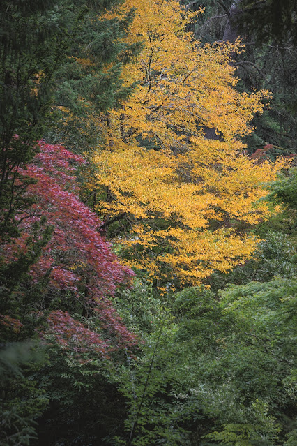Foliage colour of the acers and other trees is a strong feature at The Bloedel Reserve