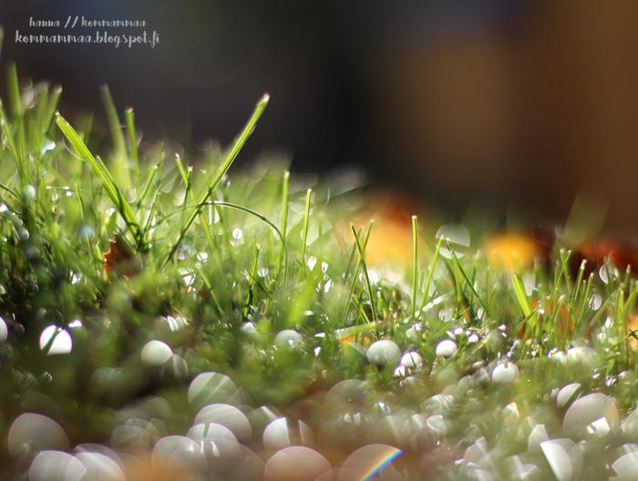 aamukaste ruohikko bokeh aurinko kevät syksy