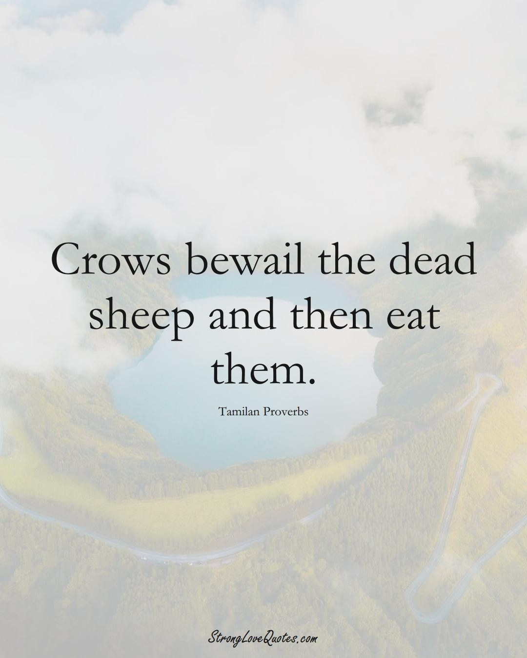 Crows bewail the dead sheep and then eat them. (Tamilan Sayings);  #aVarietyofCulturesSayings