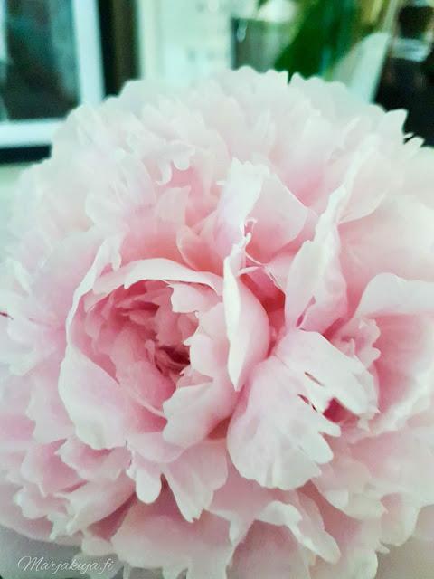 pioni sisustus skandinaavinen boheemi kynttilä kukka