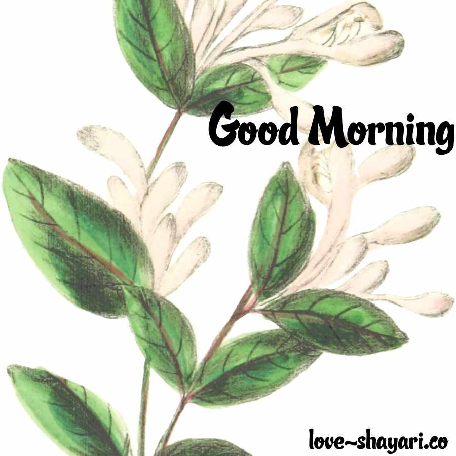 flower beautiful good morning