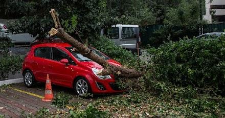 Πτώσεις δέντρων στη Θεσσαλονίκη-Κλειστά τα σχολεία στη Συκιά Χαλκιδικής